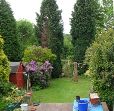 Our wild garden - full of ideas
