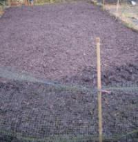 Main raised vegetable bed
