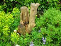 Wood offcuts make excellent garden features