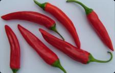 Chilli pepper Inferno