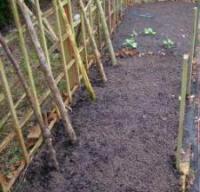 Back garden plot