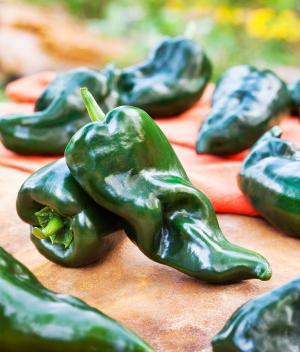 Polano Ancho chilli pepper